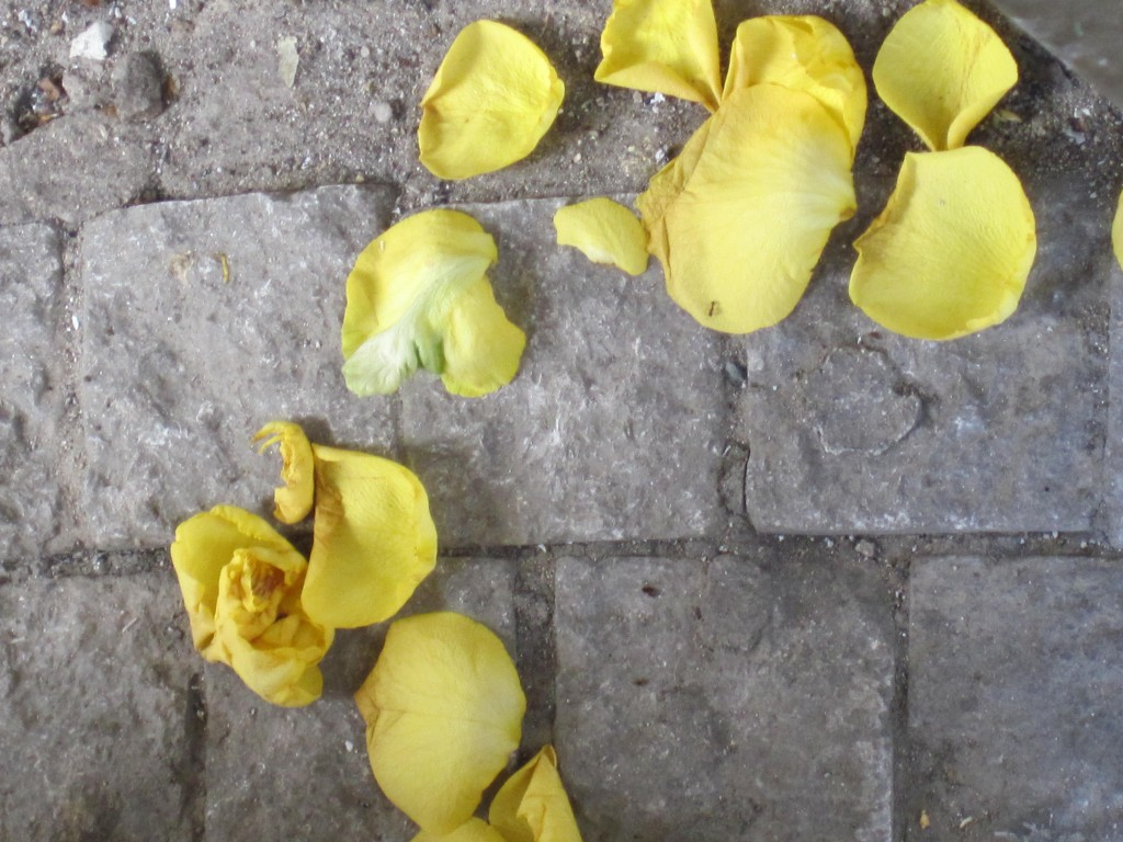 Yellow petals and Prague cobblestones.